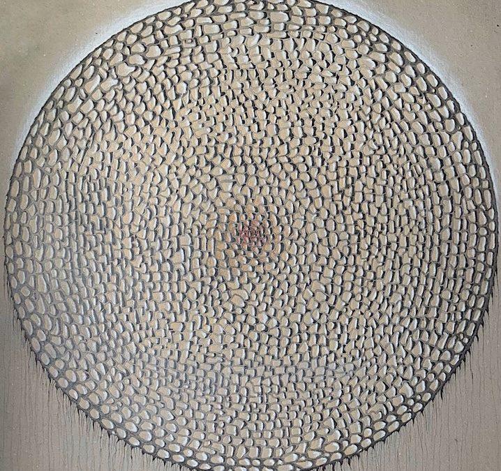 Faszination Diatom