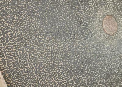 Diatom 3, Kieselalge, Zeichnung, Details