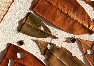 Assemblage, Wandel, Schrotschuss, Kirschlorbeer, Detail
